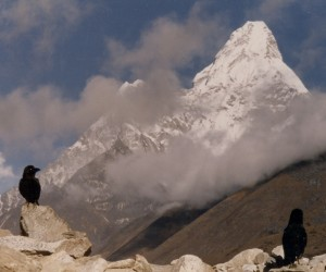 A spapshot of two crows on Mt. Everest's Teng Boche Monestary -- contemplating the mystery.